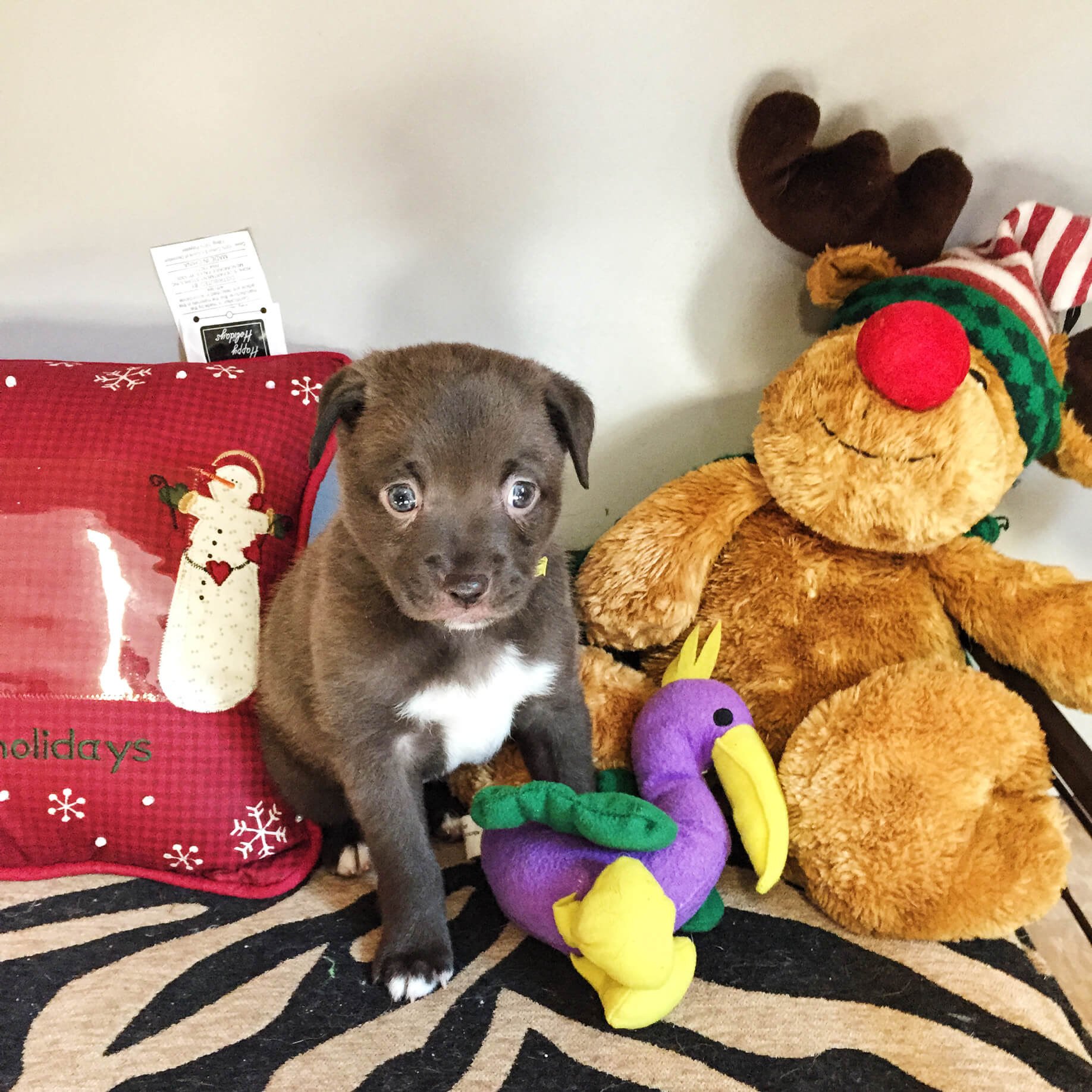 Pet of the Week {December 14th, 2015}
