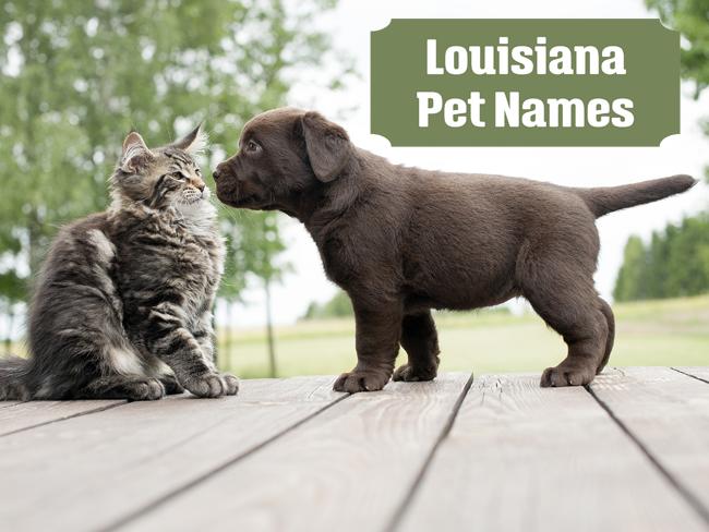 louisiana-pet-names
