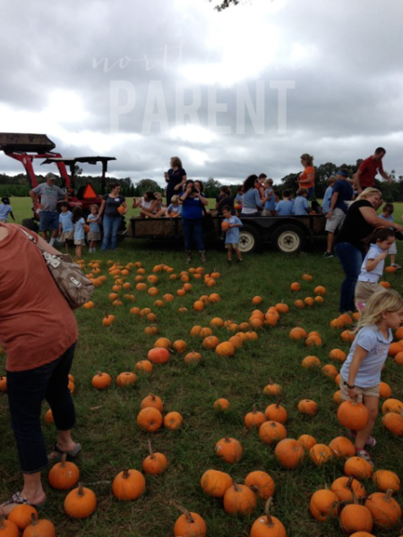 Steele's Pumpkin Patch in Angie {Worth the Drive} - Northshore Parent