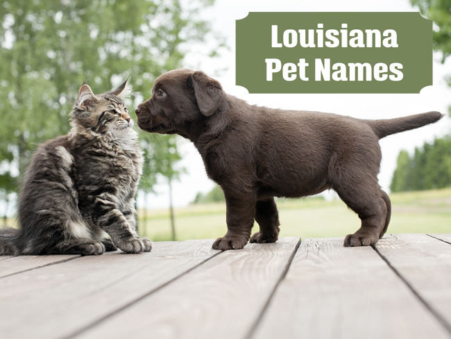 Louisiana Pet Names