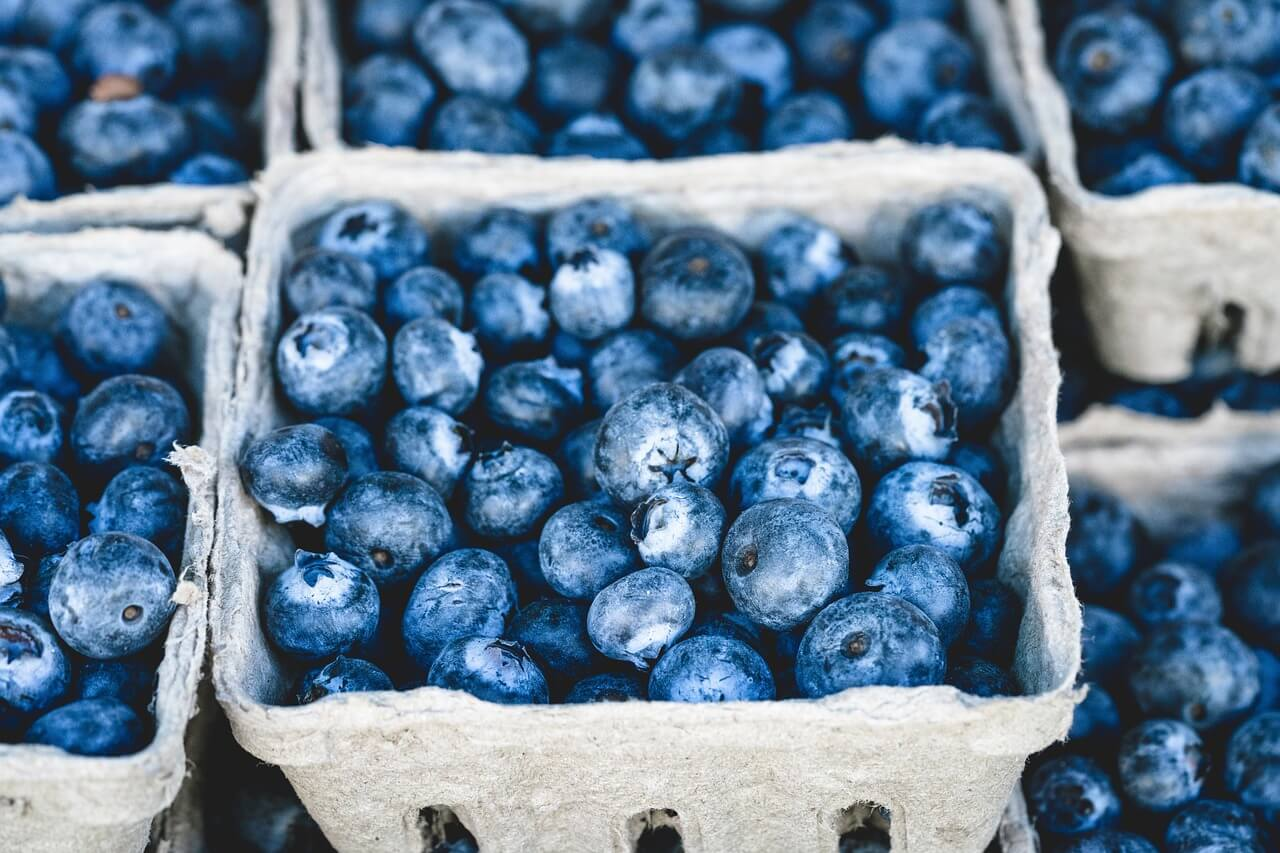 Where to Pick Blueberries on the Northshore