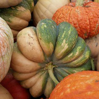 pumpkin-1683641_1280