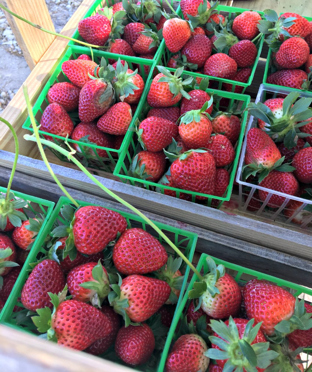 Strawberry Picking at Mrs. Heather's {A Review}