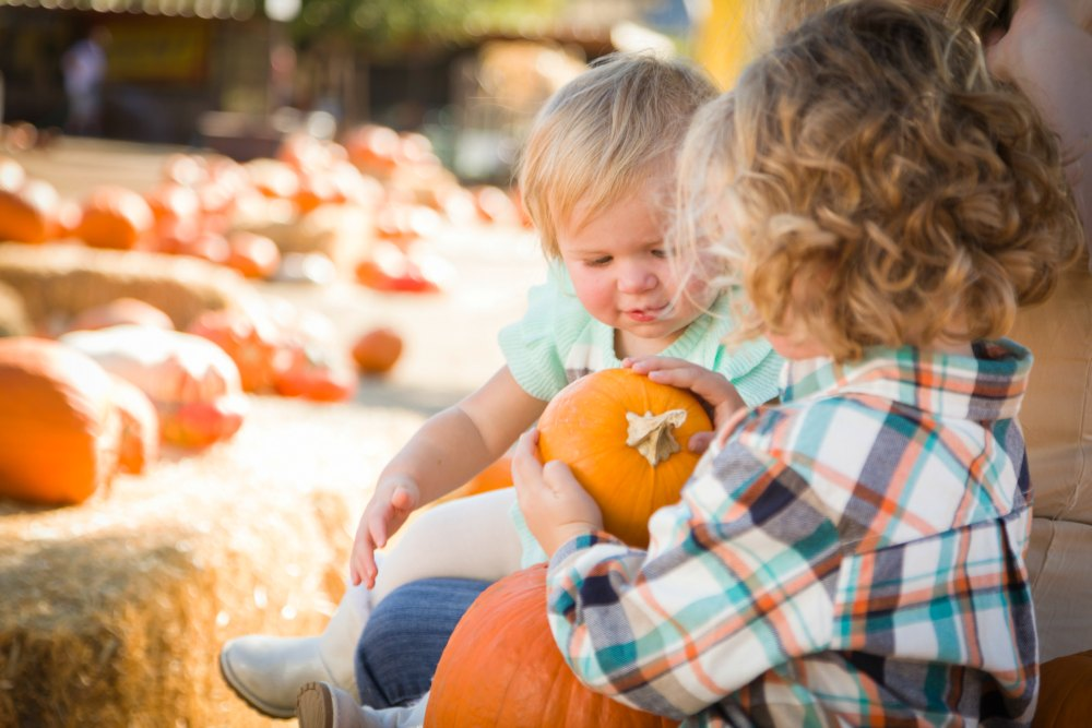 Pumpkin Patches on the Northshore