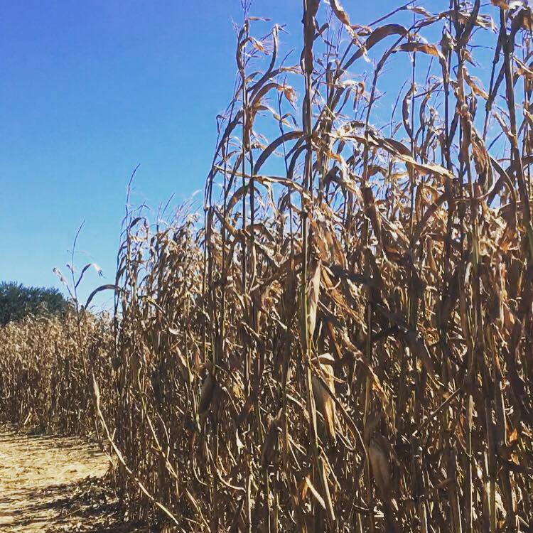 Family Fun at Southern Promiseland Farm and Corn Maze