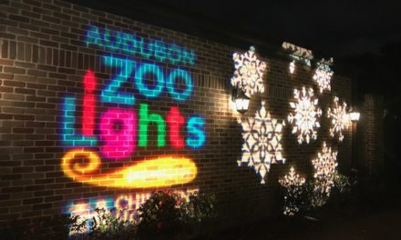 Audubon Zoo Lights {Know Before You Go}